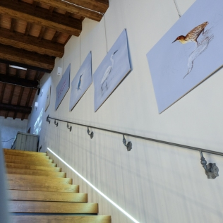animal_nature_inaugurazione_web-13