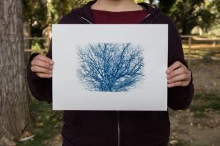 cyanotype-albero-chioma-1